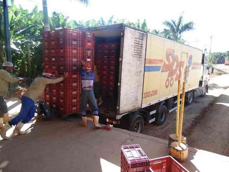 Carregamento de bananas no Projeto Jaíba: ponto de partida de 600 caminhões que saem por semana rumo a algumas das metrópoles com maior disseminação do coronavírus(foto: Luiz Ribeiro/EM/DA Press)
