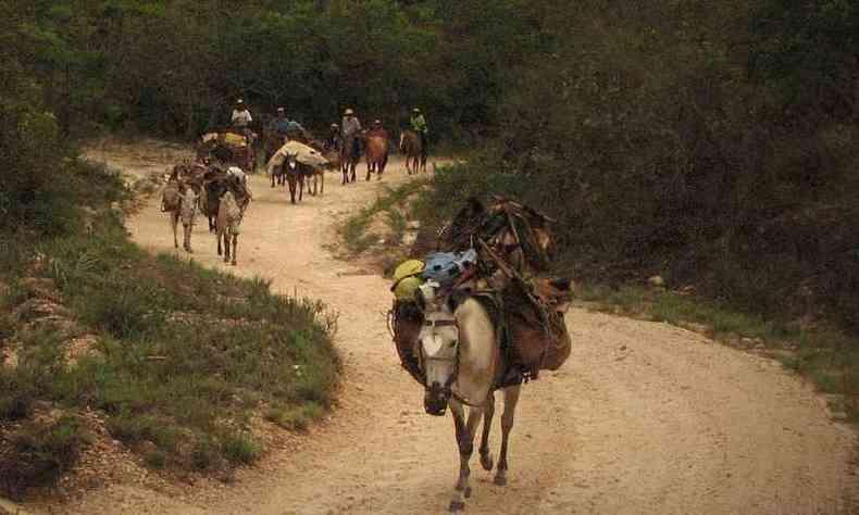 Entre o século 17 e a metade do século 20 o transporte de quase toda a produção agrícola do interior de Minas e do Brasil era feito em lombo de mulas e burros, pelos tropeiros(foto: Felipe Ribeiro/Divulgação)