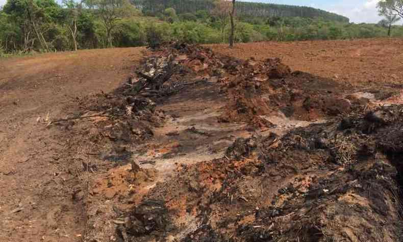 Na tentativa de encobrir desmatamento, fazendeiro colocou fogo em lenha e piorou a situação(foto: PMMG/Divulgação)
